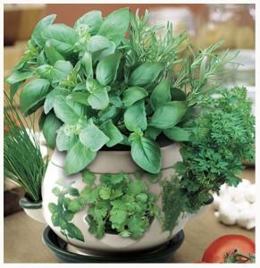 Fresh herbs add flavour